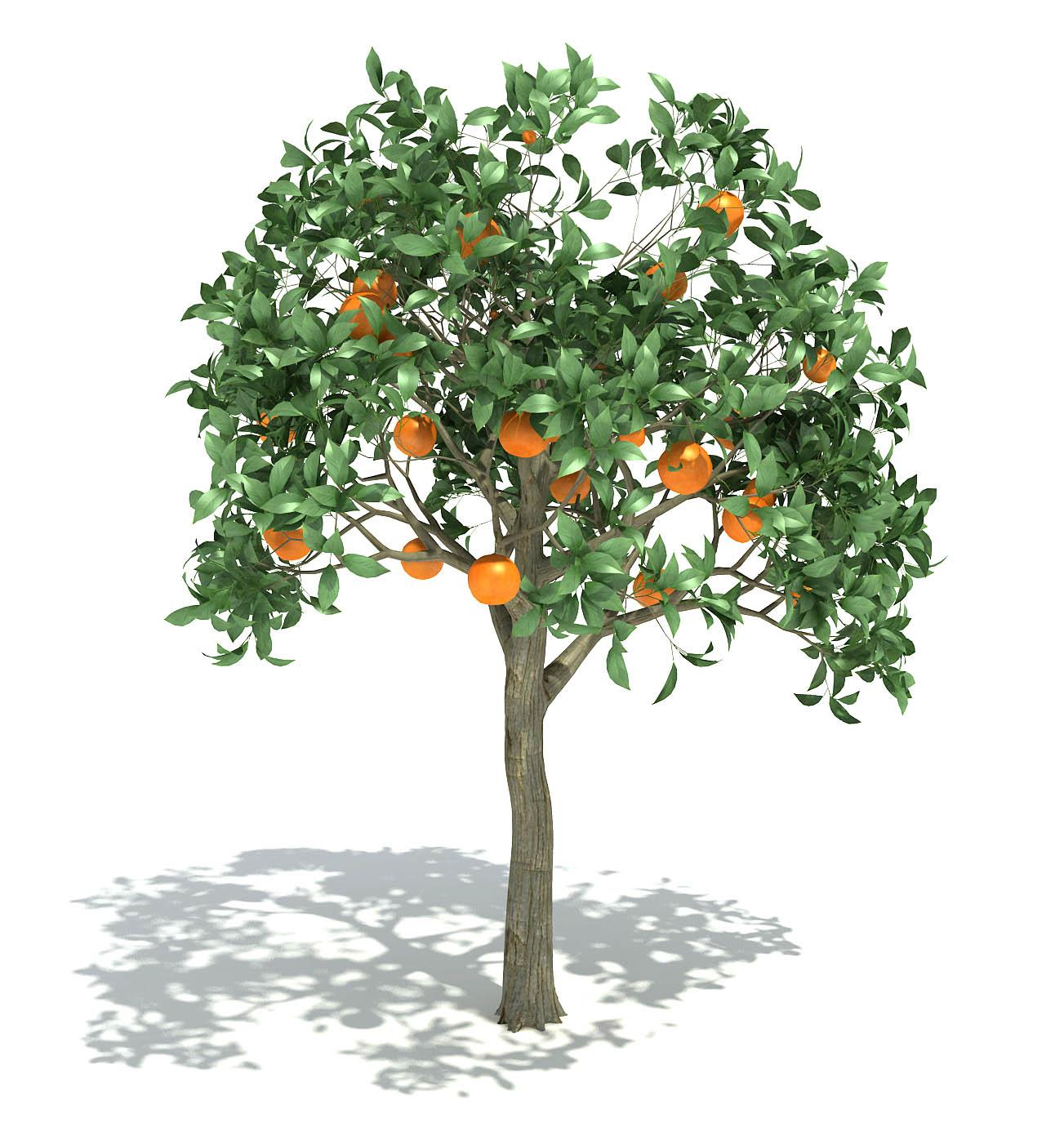 46_OrangeTree_1